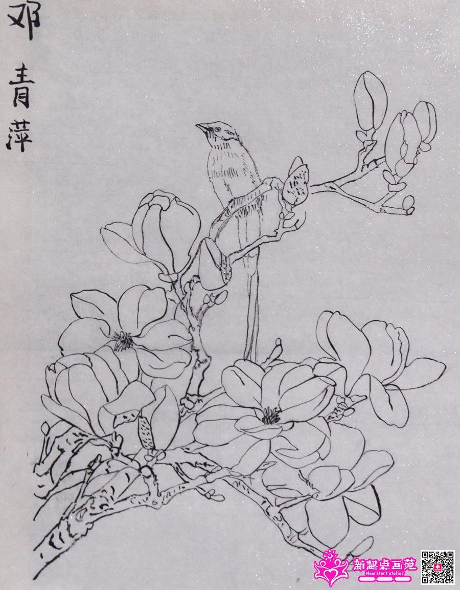 邓青萍(画)